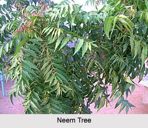 Unani Medicine in India