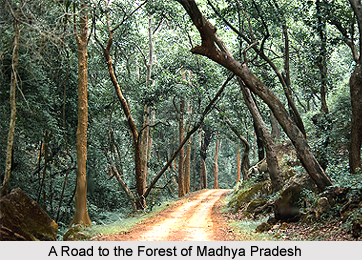 of the state and near about 12.44 percent of the forest area of India