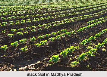 Crops of madhya pradesh for Soil in india