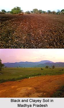 Soils of Madhya Pradesh