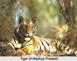 Geography of Madhya Pradesh