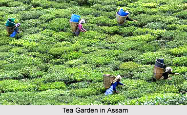 Assam, Indian state