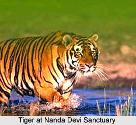 Wildlife Sanctuaries of Uttarakhand