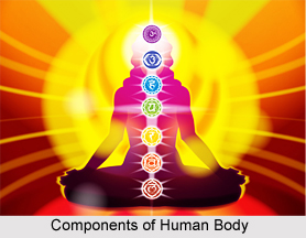 Three Components of the Body, Ayurveda