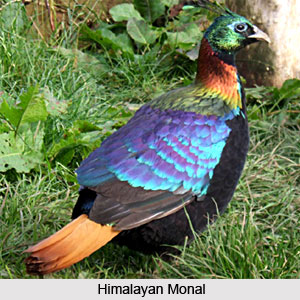 Common birds in India