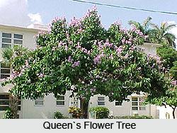 The Queen's Flower