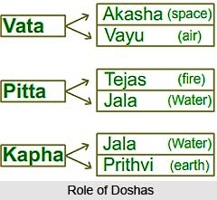 Role of the Doshas