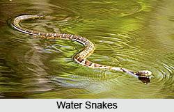 Indian Reptiles