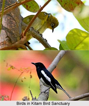 Kitam Bird Sanctuary, Sikkim