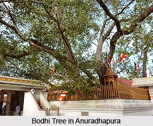 Bodhi Tree , Buddhism