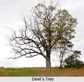 Devil's Tree, Indian Trees