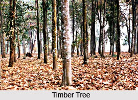Indian Timber Trees