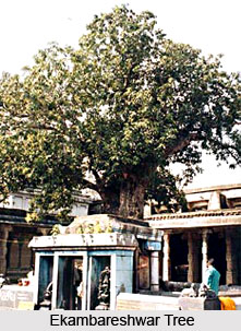 Sacred Trees of South India