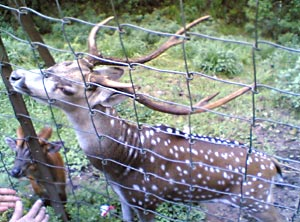 Deer Park in Kurseong , West Bengal