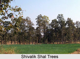 Shivalik Hills