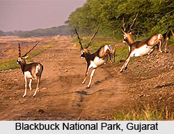 Wildlife Sanctuaries of Western India