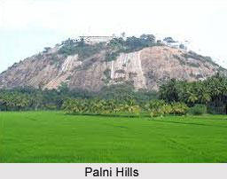 Palni Hills, Tamil Nadu