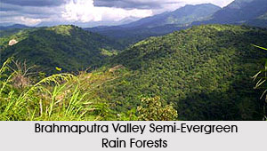 Brahmaputra Valley Semi-Evergreen Rain Forests in India