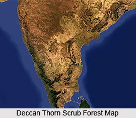 Deccan Thorn Scrub Forests in India