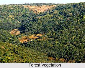 Forest Vegetation in India