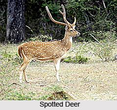 Bhitarkanika Wildlife Sanctuary, Kendrapara , Orissa