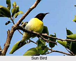 Thattekkad Bird Sanctuary, Kerala