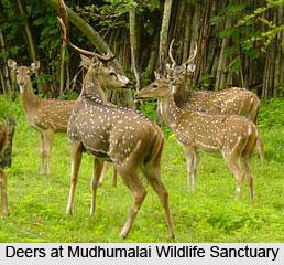 Visiting Places around Udhagamandalam (Ooty)