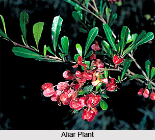 Aliar, Indian Medicinal Plants