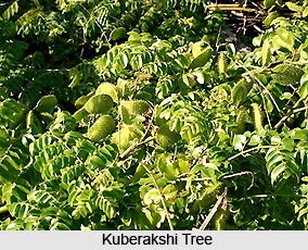 Kuberakshi, Indian Medicinal Plants