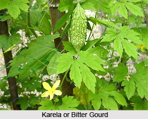 Karela, Bitter Gourd, Indian Medicinal Plant