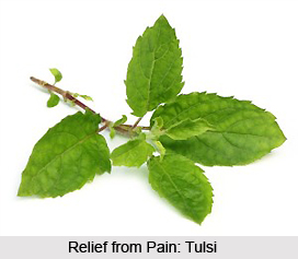 Painful Joints cured by Tulsi