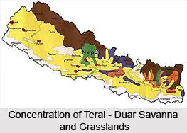 Terai-Duar Savanna and Grasslands in India