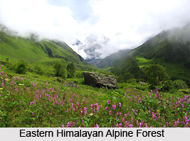 Eastern Himalayan Alpine Shrub and Meadows