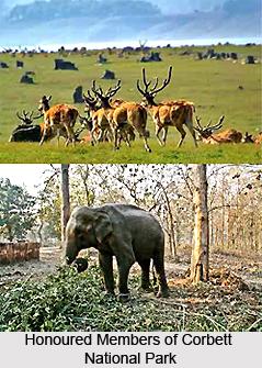 Wildlife in North India