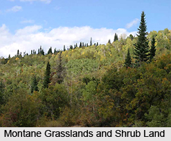Montane Grasslands and Shrub-Lands in India
