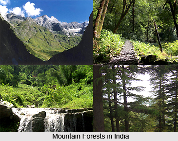 Mountain Forests in India