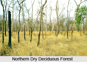 Northern Dry Deciduous Forests in India