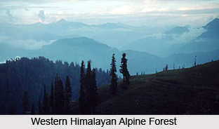 Western Himalayan Alpine Shrub and Meadows
