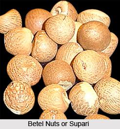 Supari, Gubak, Indian Medicinal Plant