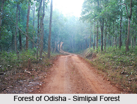 Hilly and Forest areas, Indian Sub Continent