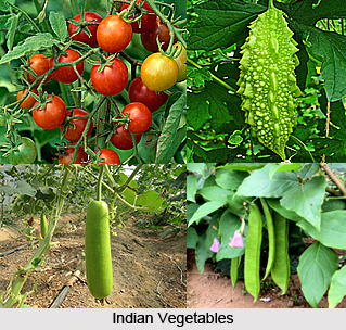 Indian Vegetables