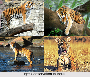 Measures to Conserve Indian Wildlife