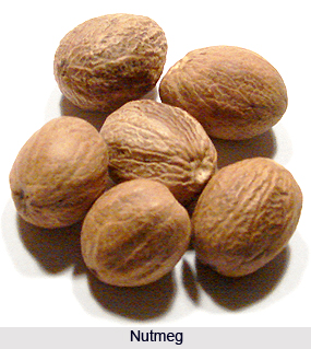 Nutmeg, Indian Spice