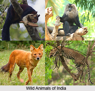 Wildlife Protection Act of 1972