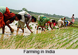 Farming in Indian Villages