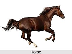 Omens Related to a Horse, Vastu Shastra