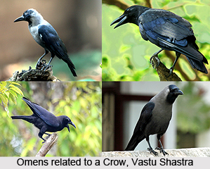 Omens related to a Crow,  Vastu Shastra