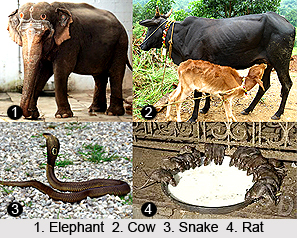 Sacred Animals in India