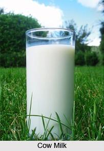 Cow Milk, Panchagavya