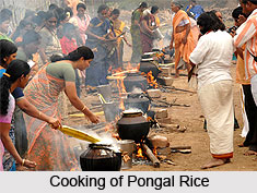 Pongal, Indian Festival